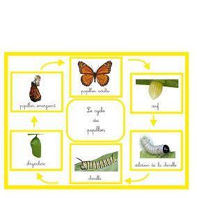 Le cycle du papillon | Boutique ''documents Montessori''