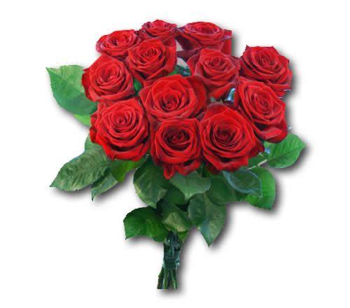 12-rote-rosen-versenden.jpg (500×440)