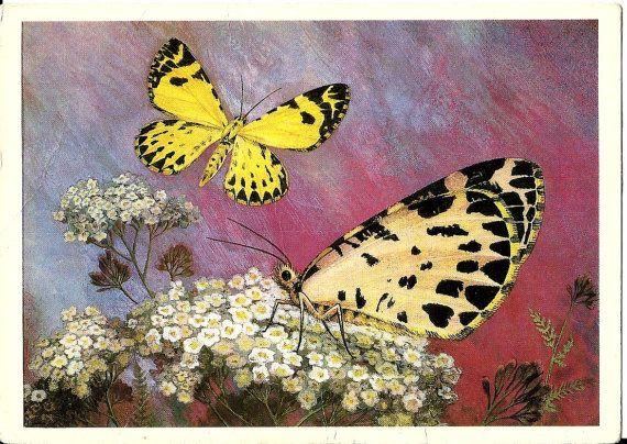 Beautiful butterflies Vintage Russian Soviet Postcard by LucyMarket on Etsy, $1.50