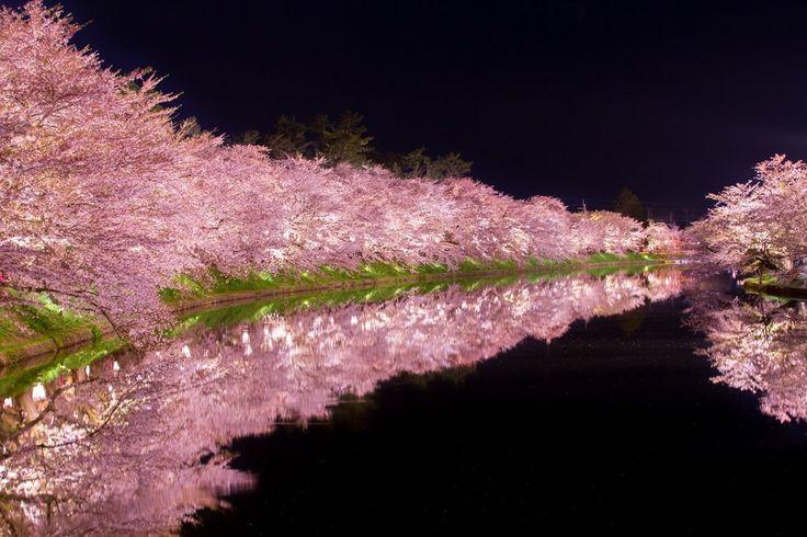弘前公園の夜桜。桜と影絵みたいな世界が綺麗  