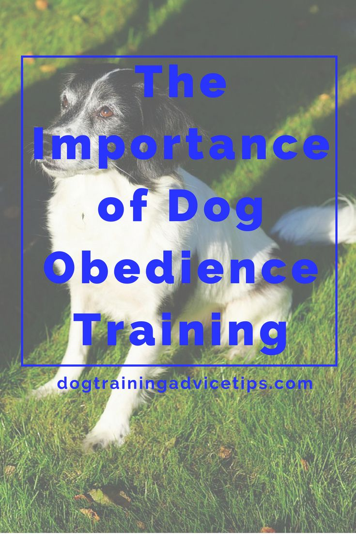obedience training for dogs pdf
