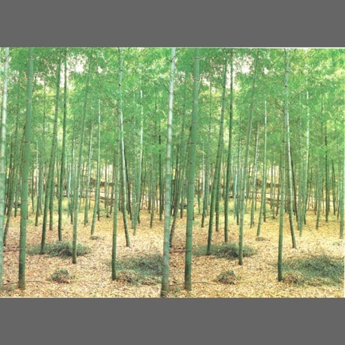 Bamboo forest wall mural wallpaper 8 part 1861 asian for Bamboo forest wall mural