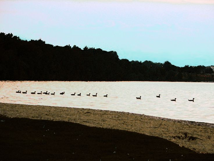 Geese off Minet's Point