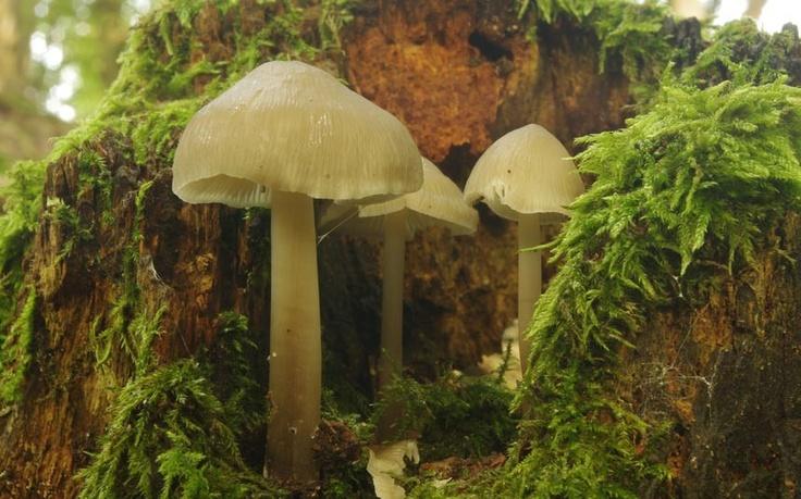 Fungi growing on a rotting tree stump