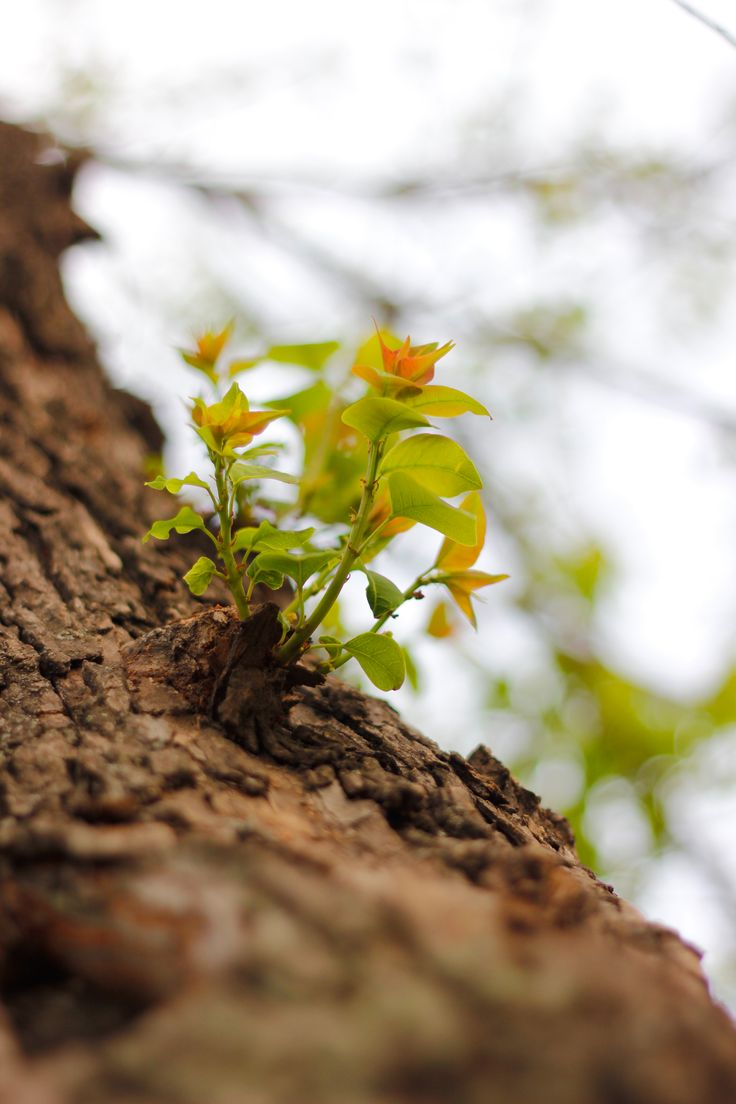 A new beginning,outdoor,photogrraphy,nature