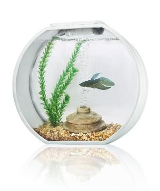 Deco O Mini Round Aquarium 10 Litre White £49.99    Quantity      Product Name: Deco O Mini    Description: Deco O Mini round fish tank white    Designer aquarium Magic touch lighting feature for home, office and shops    Made by clear glass  Magic touch lighting feature  Advance lighting with High Power LED: Sun-like Shimmering Ripples creates a very relaxing environment  Blue LED's create Moonlight Effects at night  Built-in filtration unit is hidden in tank décor