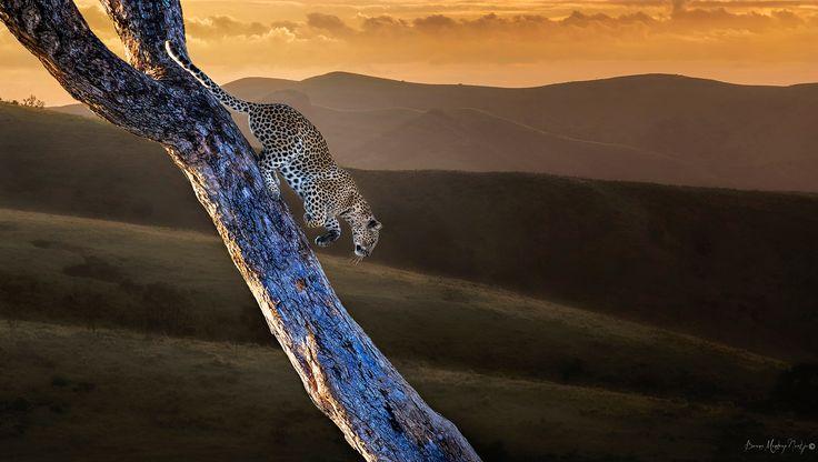 Leopard - I named this image - (Leopards Valley) - Copyrighted - bruna@thrumyafricanlens.co.za