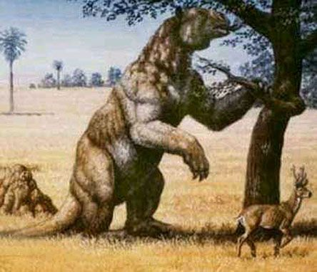"Megatherium (""Great Beast"") was a genus of elephant-sized ground sloths endemic to Central and South America that lived from the late Pliocene through the end of the Pleistocene. Its size was exceeded by only a few other land mammals, including mammoths. There have been alleged sightings of the Giant Ground Sloth reported in the Amazon Rainforest of South America."