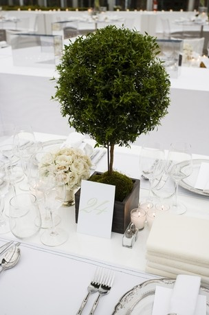 Summer Party, Wedding: manicured look of a topiary plant is truly elegant and adds a great architectural detail to your dinner table.  Can be purchased at your local garden store.
