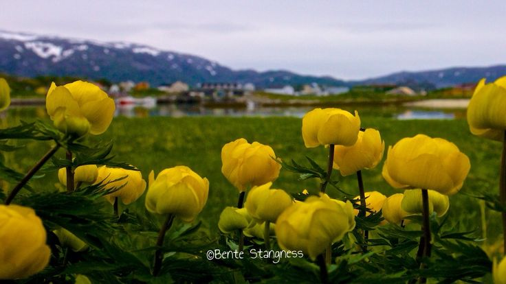 Sommarøy, Hillesøy, Tromsø, northernnorway, Northern Norway