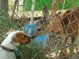 Rocco / JRT    - Love almost impossible