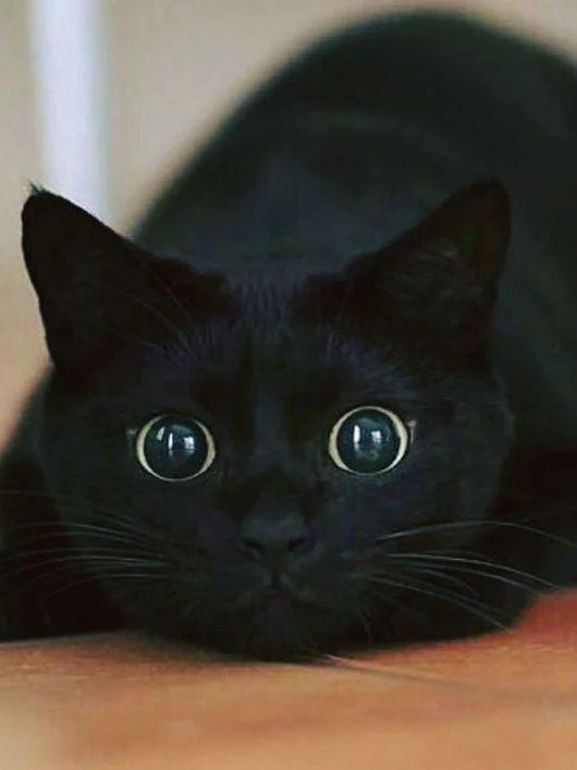 Gatito mirón. ⊙▽⊙