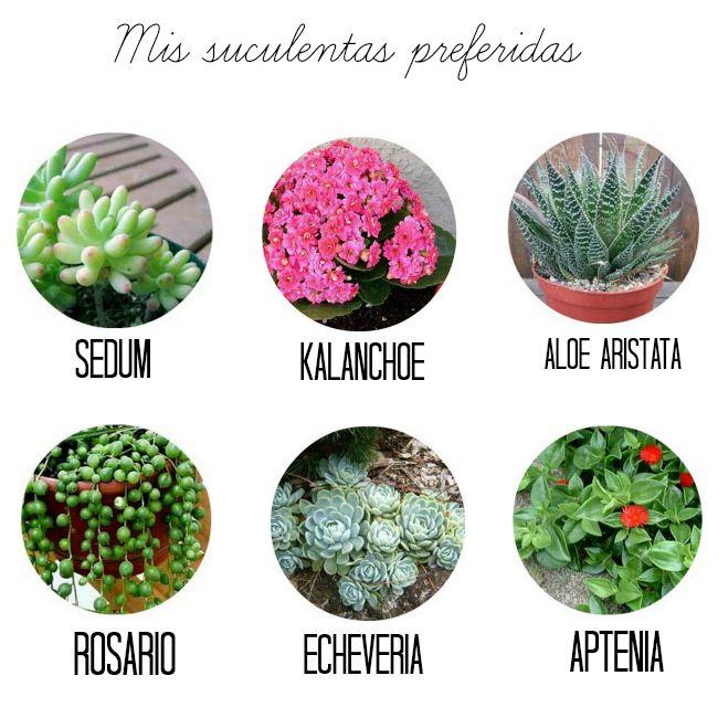 Las suculentas son las plantas ideales para las personas que no tienen tiempo de cuidar de un jardín, sobre todo de estar pendientes del riego. Vienen en varios tonos de verdes e incluso grises y…