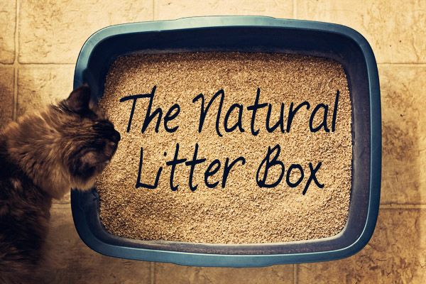 How To Keep Cat Litter From Sticking To Box