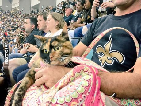Someone managed to sneak a cat into the Saints game tonight.