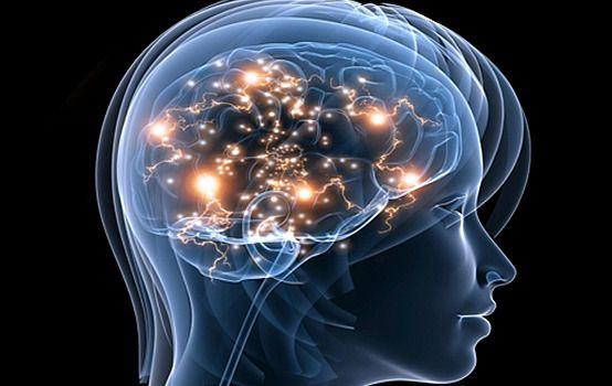 hersenen - Google zoeken