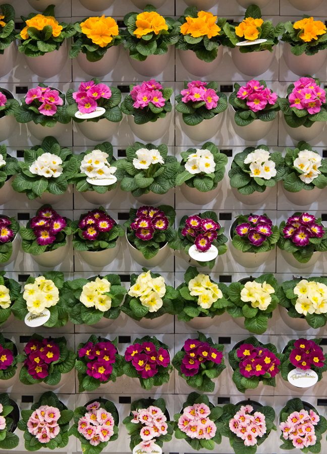 Wall of Primula Paradiso at IPM Essen
