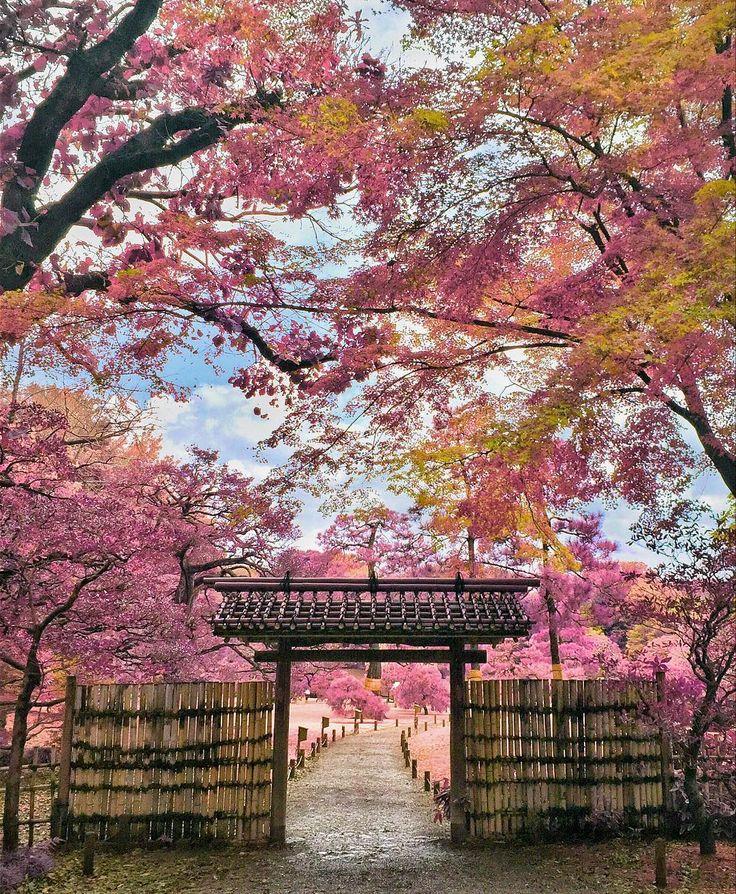 日本全国絶景桜スポット