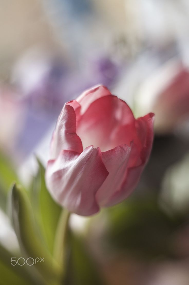The 226 Best Pink Flowers Images On Pinterest Beautiful Artwork