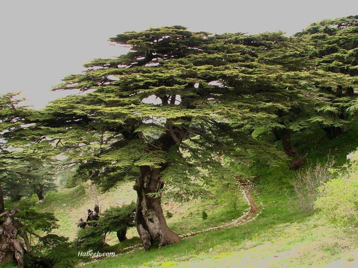 Shouf Cedar Reserve, Lebanon