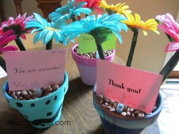 beautiful potted flower pens