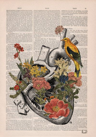 Winter Sale 10% off Flowery Heart with bird. Anatomy by PRRINT