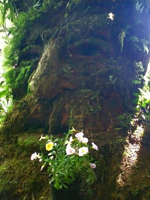Barbol guardián de los bosques, les desea un feliz día, desde Bichacue Yath, el mágico reino de los musgos.