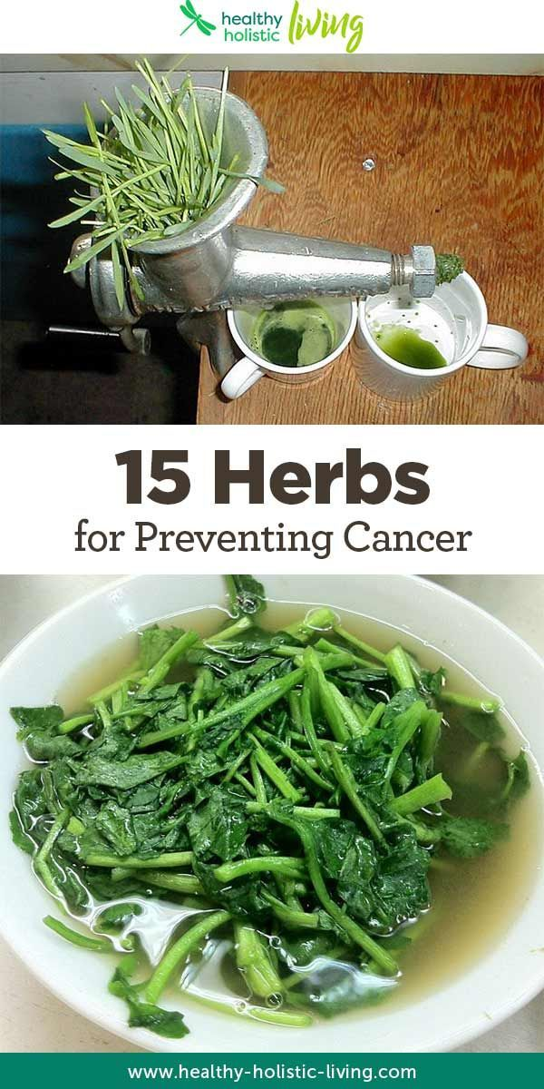 The body of research for natural preventative medicine is growing larger and larger every day! In all the cancer prevention research about healing herbs so far, these are the 15 best cancer fighting herbs!
