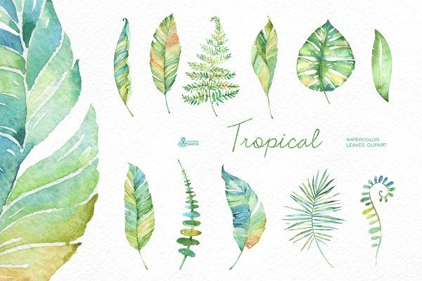 Tropical watercolor leaves ~ Objects on Creative Market