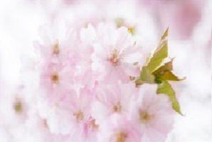Healingcirkel – transformerande ljusstund 2015-12-20 14:00-17:00 – Henån, Orust Nu erbjuds en transformerande healingcirkel under tre timmar denna helgdag. Cirkeln är både för dig som redan utövar meditation eller healing i någon form och för dig som är nybörjare. Du bör ha en längtan eller önskan att gå djupare inom dig själv, för att nå kärnan av ditt inre väsen. En ren transformerande healingresa i ditt djupare inre, som öppnar nya fantastiska dörrar i ditt liv. Varmt välkommen!