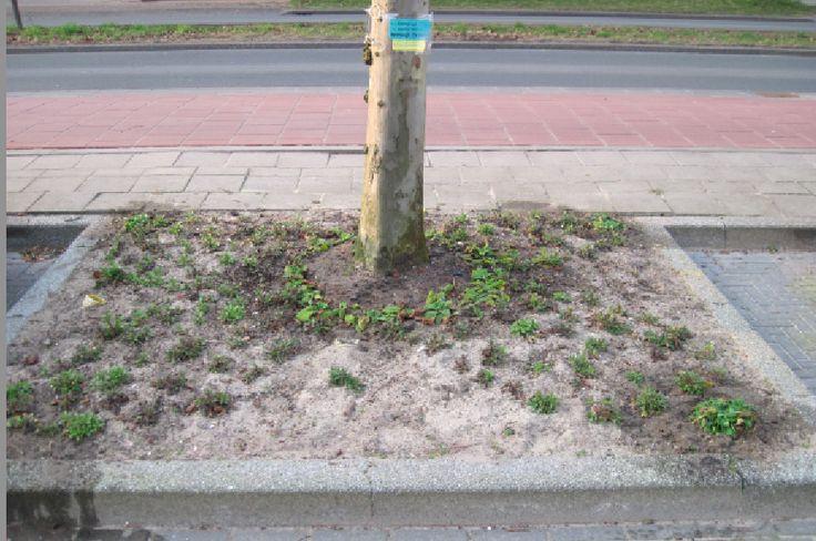 Het bleef erg droog dus iedere week 1 gieter water gegeven. Hier de boomspiegel na 3 weken. De plantjes zijn allemaal goed gaan wortelen.