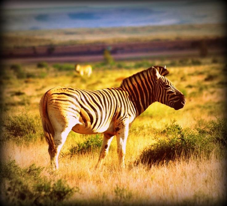 Klein Karoo National Park