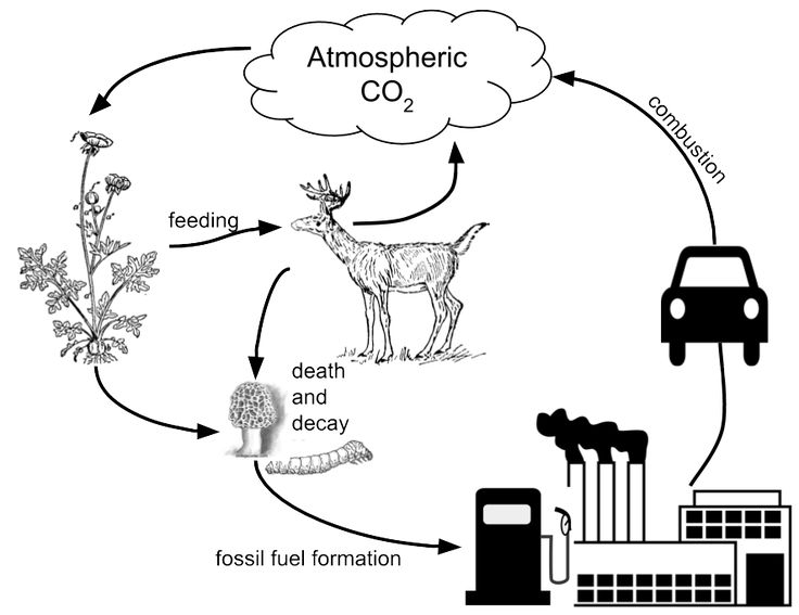 best 25  carbon dioxide cycle ideas on pinterest