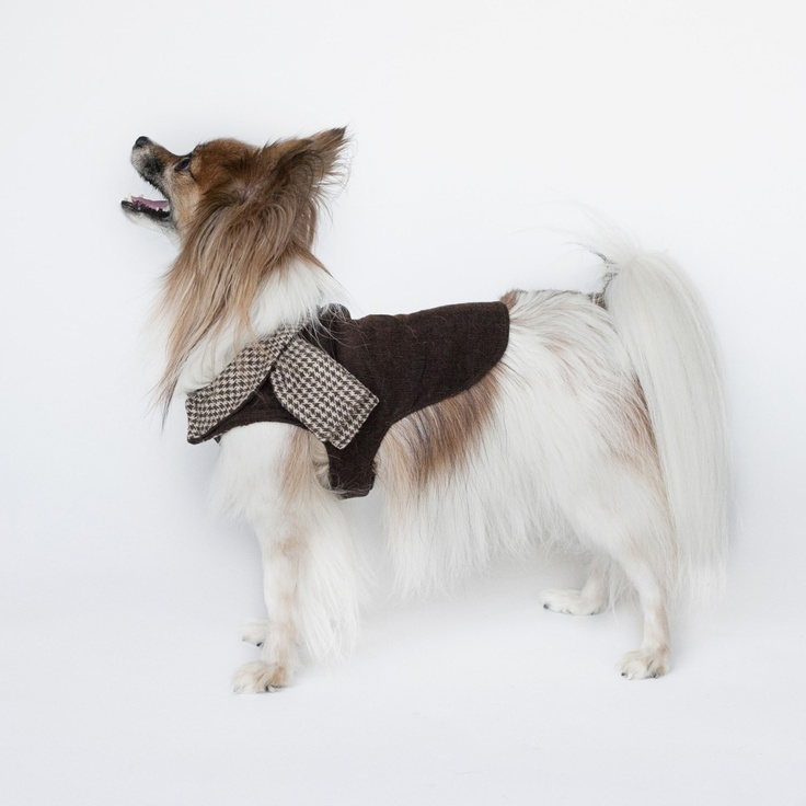Preppie Pup: Lighweight Designer Dog Coat