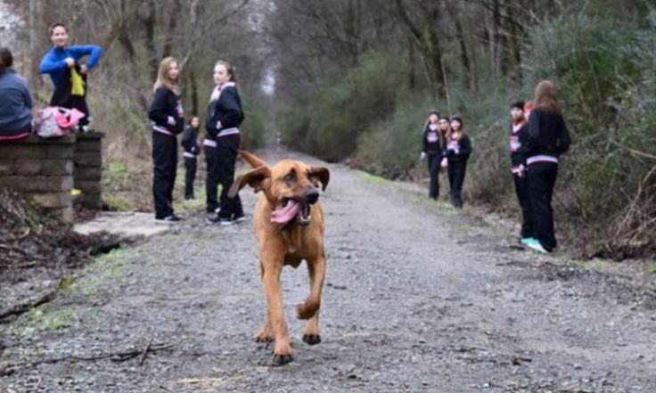Dog accidentally joins in a half-marathon and finishes in seventh place