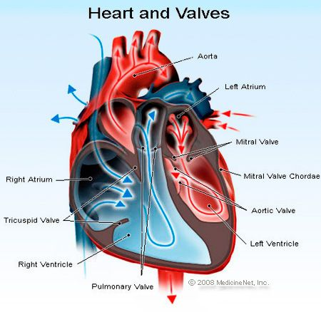 right sided heart failure, congestive heart failure treatment, heart failure macaroni and cheese, myocardial infarction heart failure READ MORE AT http://medical-helpful-info.blogspot.com/2012/10/heart-failure-not-responding-to-drugs.html