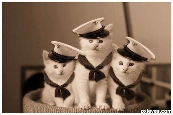 kittens kittens navy kittens