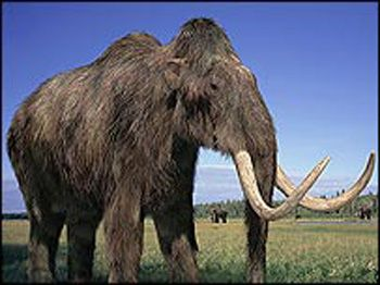 "Oct 6-Jan 13: ""Mammoths and Mastodons: Titans of the Ice Age"" exhibition Museum of Science Boston"