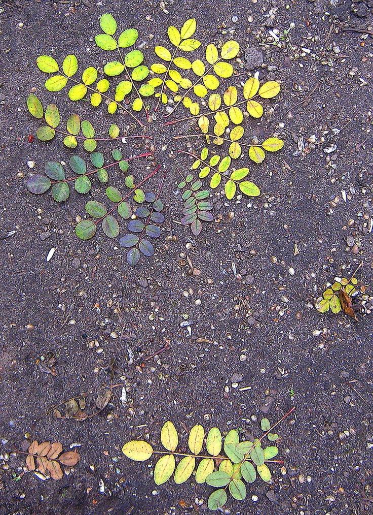 Buiten bladeren op kleur leggen!