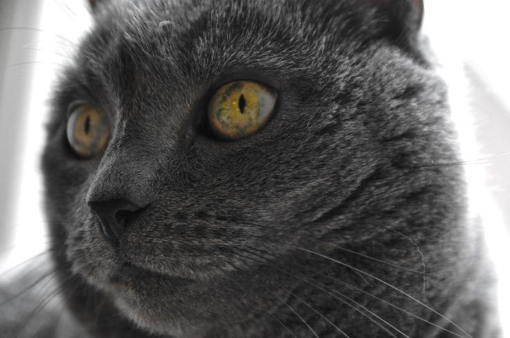 Cat 4.