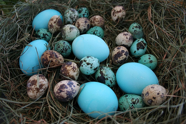 wow  these are amazing - I thought only Robin's eggs were this bright?!