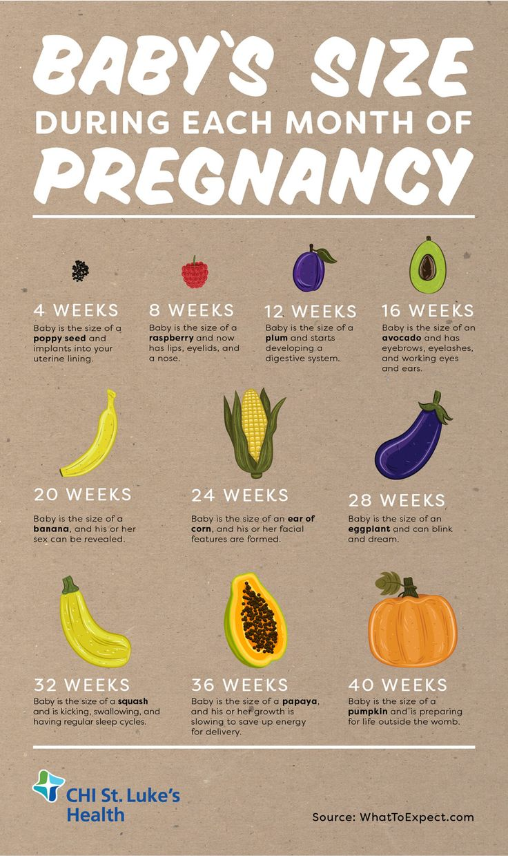 prenatal development month by month pdf