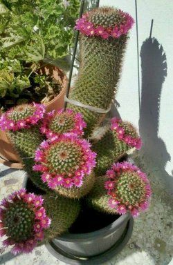 Las 25 mejores ideas sobre jardines bonitos en pinterest - Cactus raros fotos ...