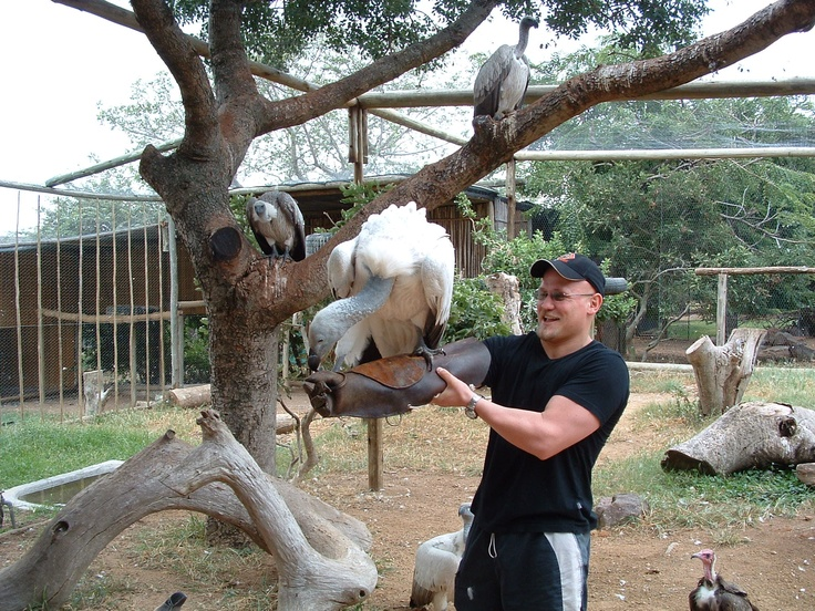 Safari with a difference. Feeding a Cape Vulture.