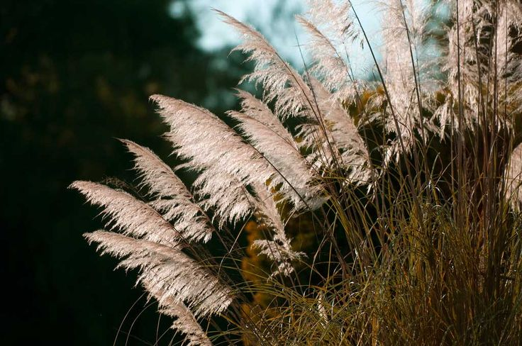 Fab 5 Grasses For Fall Colour