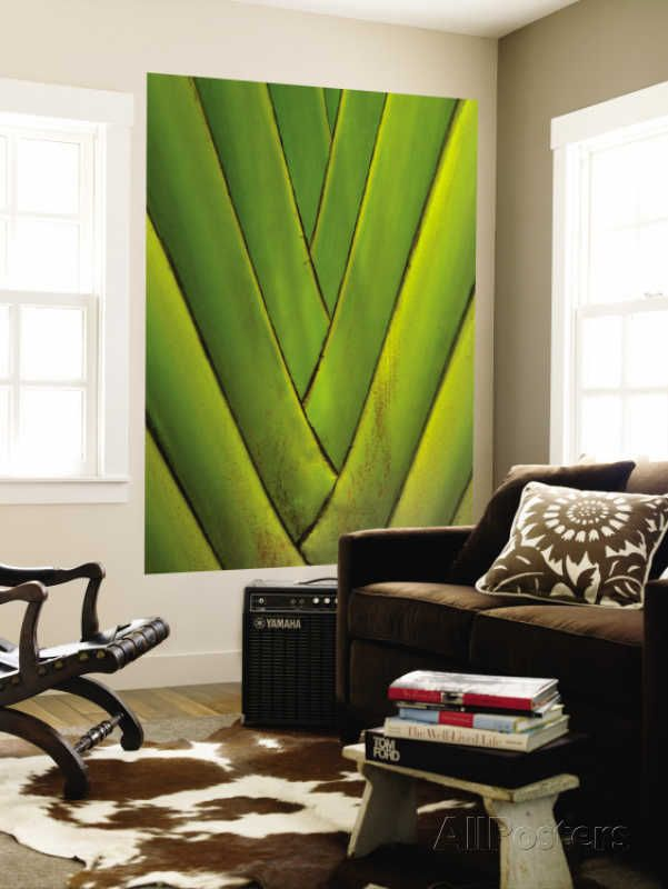 http://www.allposters.com/-sp/Detail-of-Palm-Leaf-Posters_i8293685_.htm