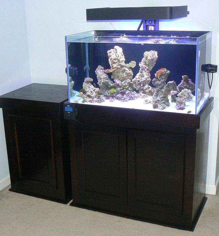 17 Best Ideas About Reef Aquascaping On Pinterest