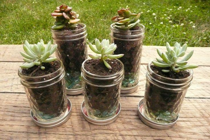 #HLo Tips: Sembrar suculentas en recipientes mason jars una buena idea para centro de mesa o recuerdos.