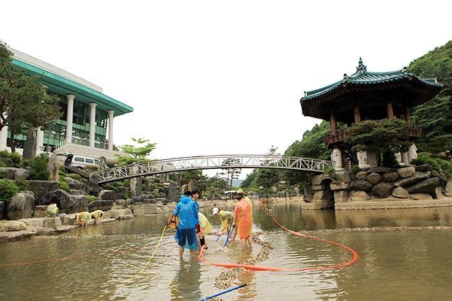 [摂理ニュース]池の掃除003