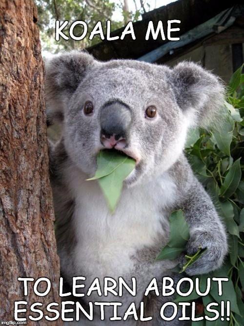 Surprised Koala Meme | KOALA ME TO LEARN ABOUT ESSENTIAL OILS!! | image tagged in memes,surprised koala | made w/ Imgflip meme maker
